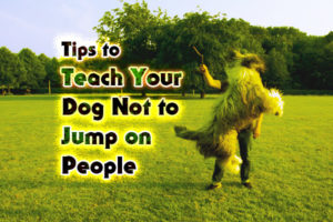 Tips to Teach Your Dog Not to Jump on People