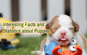 Interesting Facts and Statistics about Puppies