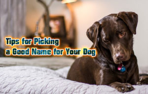Tips for Picking a Good Name for Your Dog
