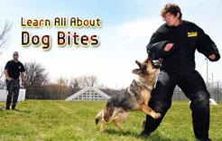 Learn All About Dog Bites