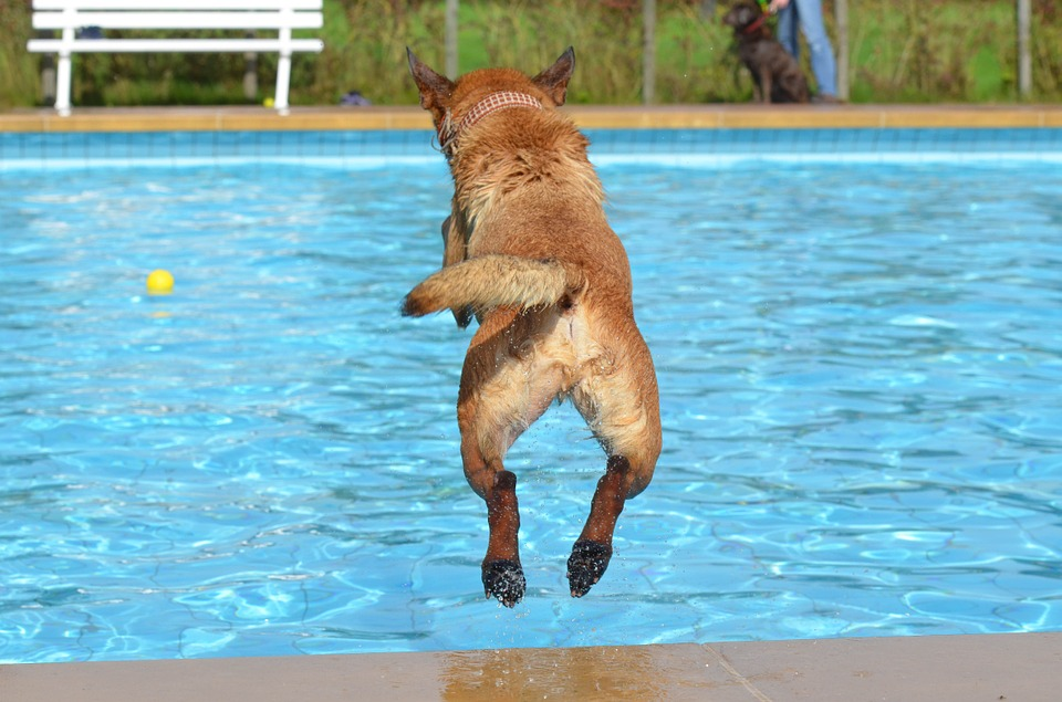 Dog jumping on the pool