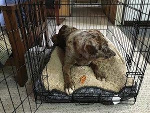 Tips for Soundproofing Your Dog Crates