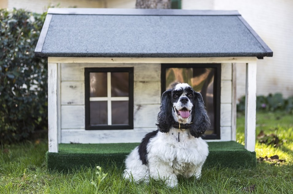 a dog standing in front of his kennel/house