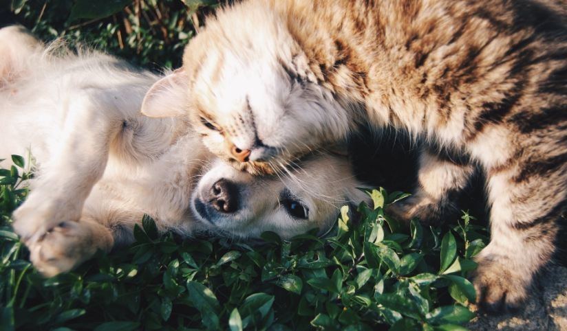 Cat and dog close to each other