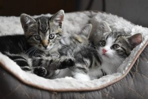 What to consider when looking for kittens for sale